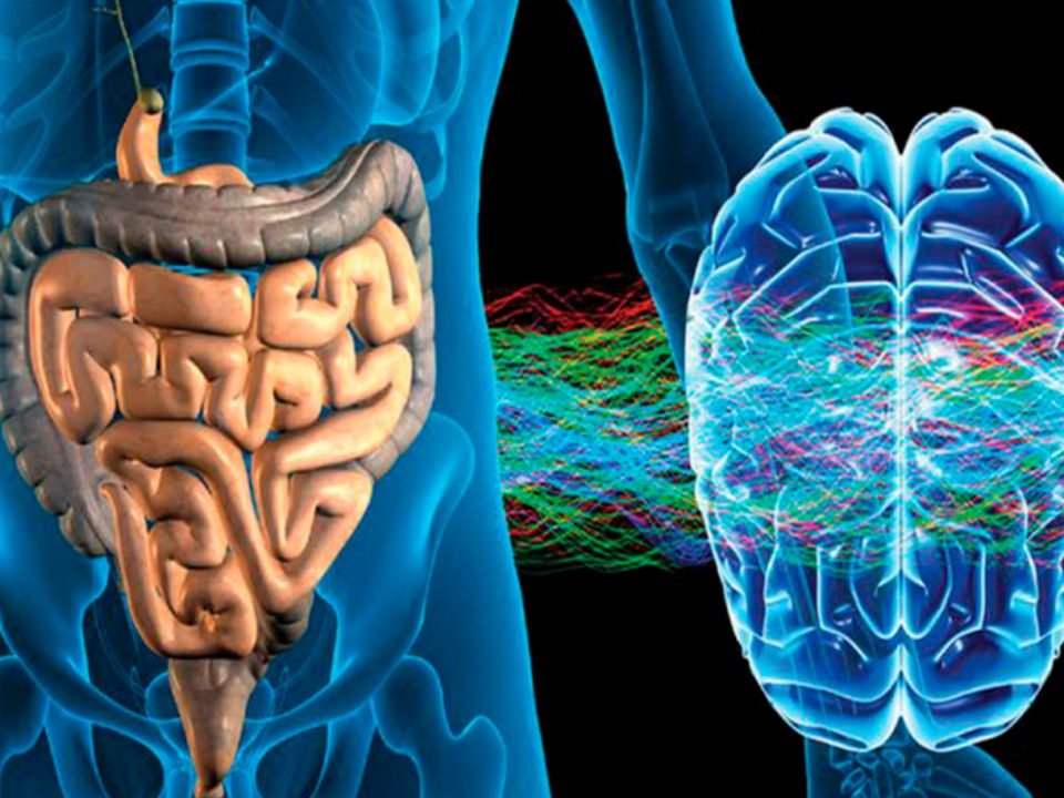 From gut dysbiosis to altered brain function and mental illness: mechanisms and pathways